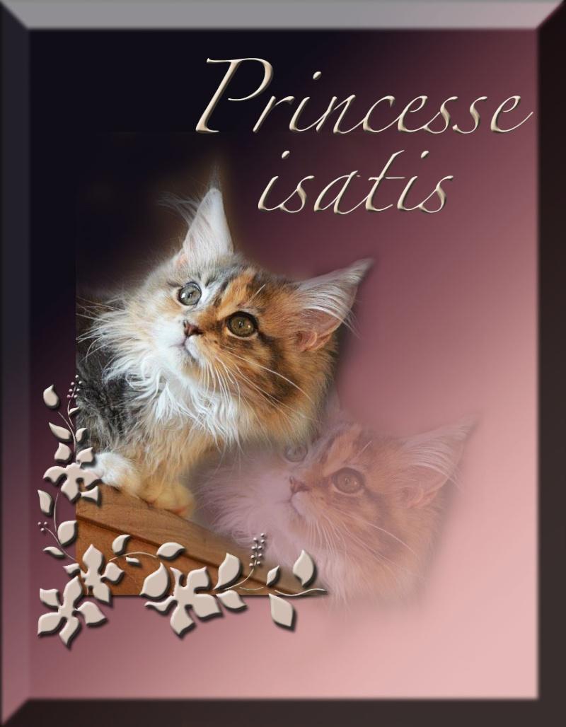 Princesse Isatis Prince11