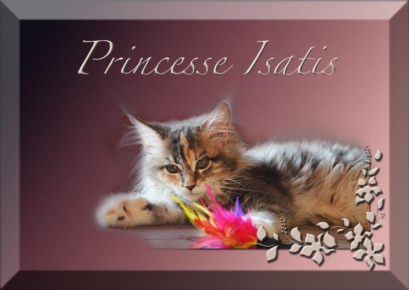 Princesse Isatis Prince12