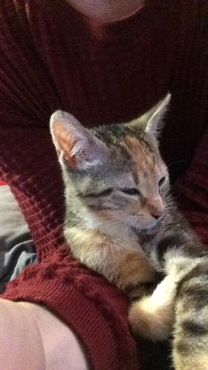 Moussaka / Carla né le 15 septembre 2016  Image211