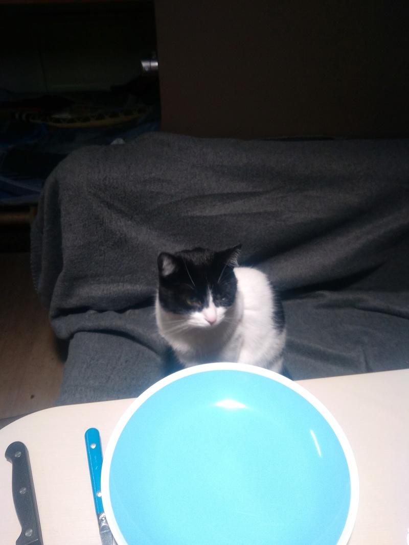 Janice,chaton femelle née le 20 mars adoptée - Page 2 Img_2011