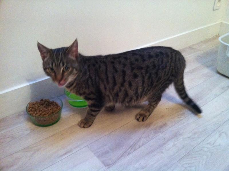 EXTRÊME URGENCE fourrière le 3 février pour une chatte Photo10