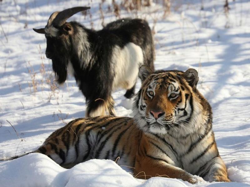 Nos amis les animaux Cohabi10