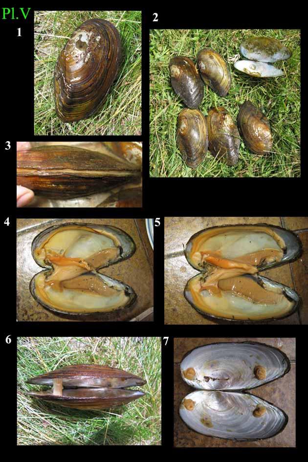 Livres Mollusques terrestres Panodo10