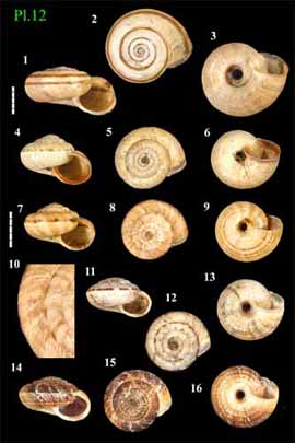 Livres Mollusques terrestres Pres0110