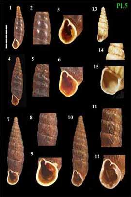 Livres Mollusques terrestres Pres0210