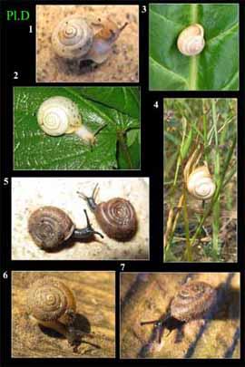 Livres Mollusques terrestres Pres0310