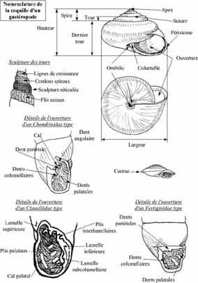 Livres Mollusques terrestres Pres0410