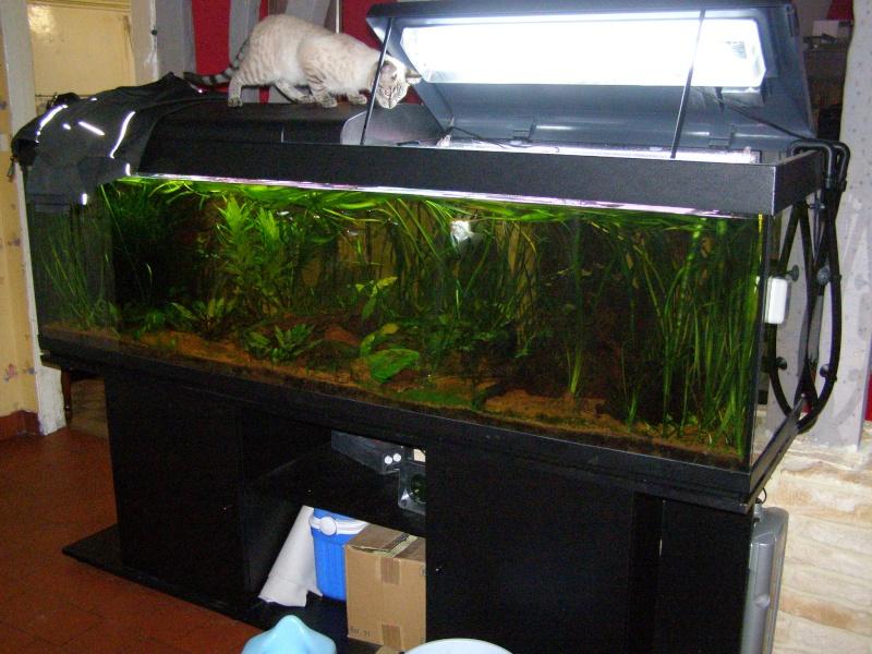 Mon tout premier aquarium 600 litres communautaires - Page 2 Pa228010