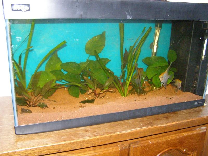 Mon tout premier aquarium 600 litres communautaires - Page 2 Pa238013