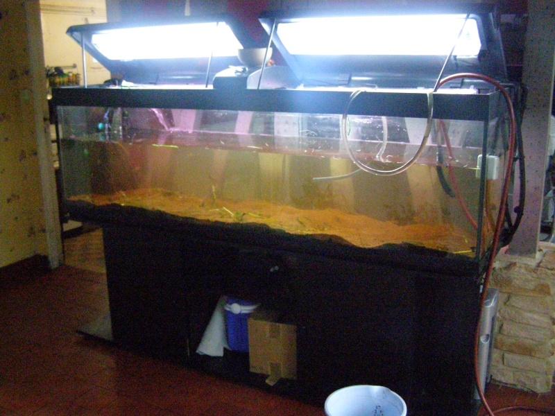 Mon tout premier aquarium 600 litres communautaires - Page 2 Pa238014