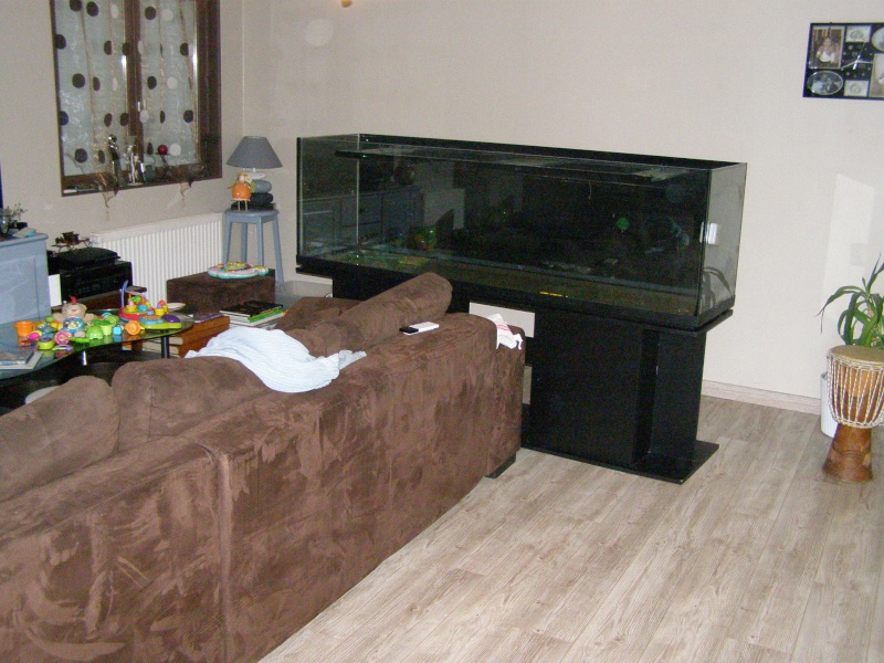 Mon tout premier aquarium 600 litres communautaires - Page 2 Pa238015