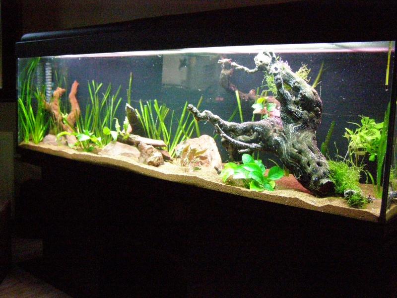 Mon tout premier aquarium 600 litres communautaires - Page 2 Pa248011
