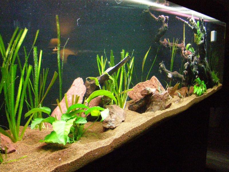 Mon tout premier aquarium 600 litres communautaires - Page 2 Pa248012