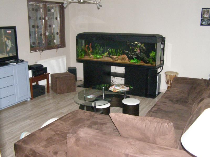 Mon tout premier aquarium 600 litres communautaires - Page 2 Pa248013