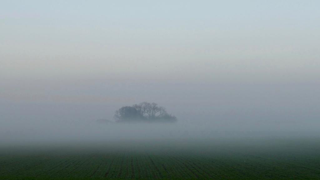 Bosquet perdu dans la brume P1080415
