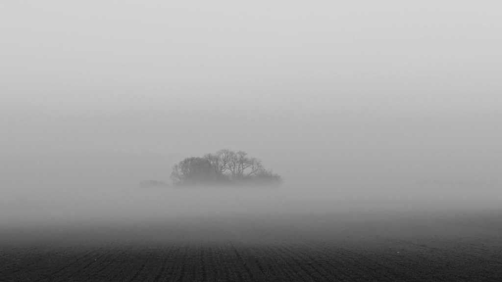 Bosquet perdu dans la brume P1080416
