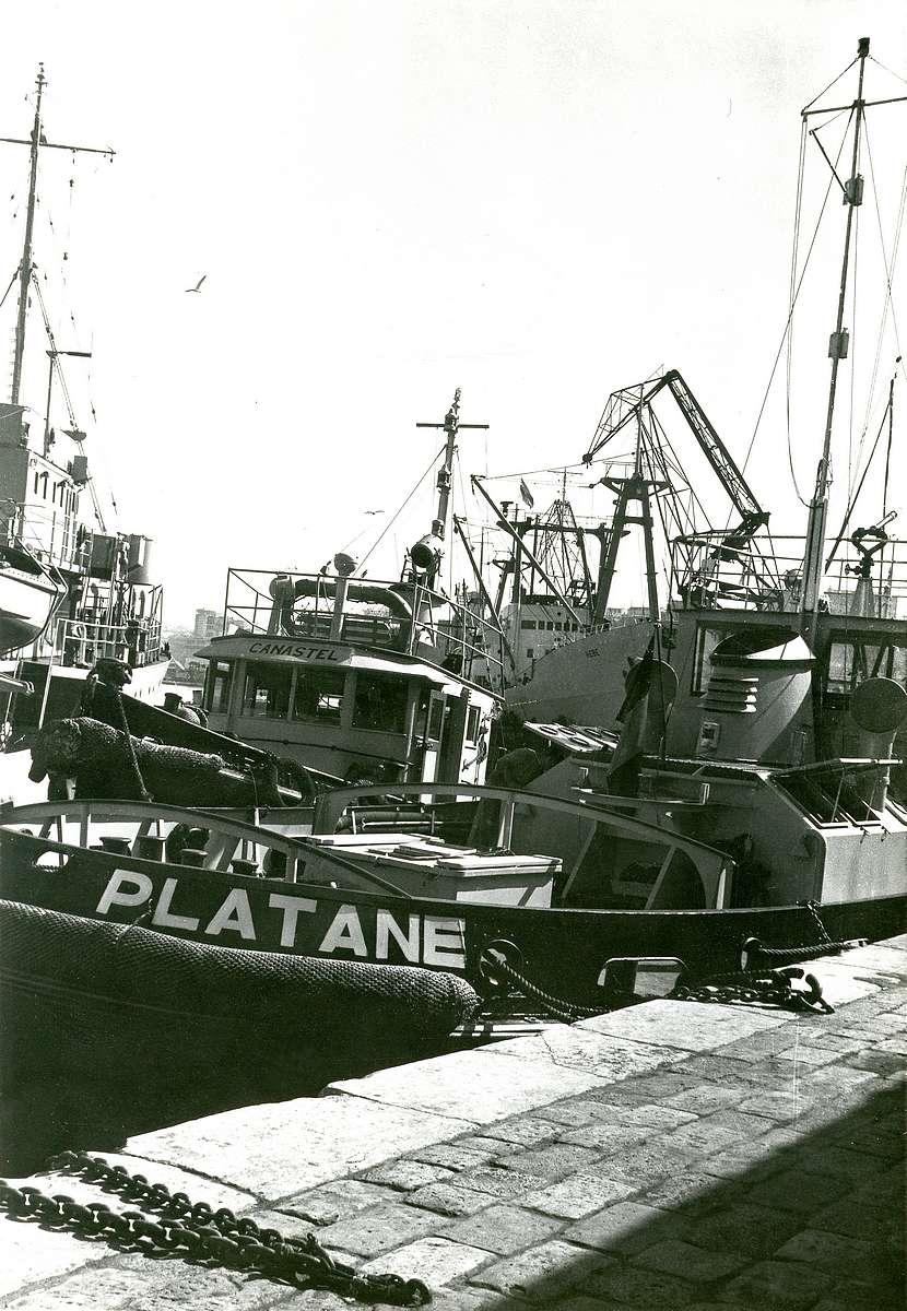 UNITÉ MARINE ORAN Platan17