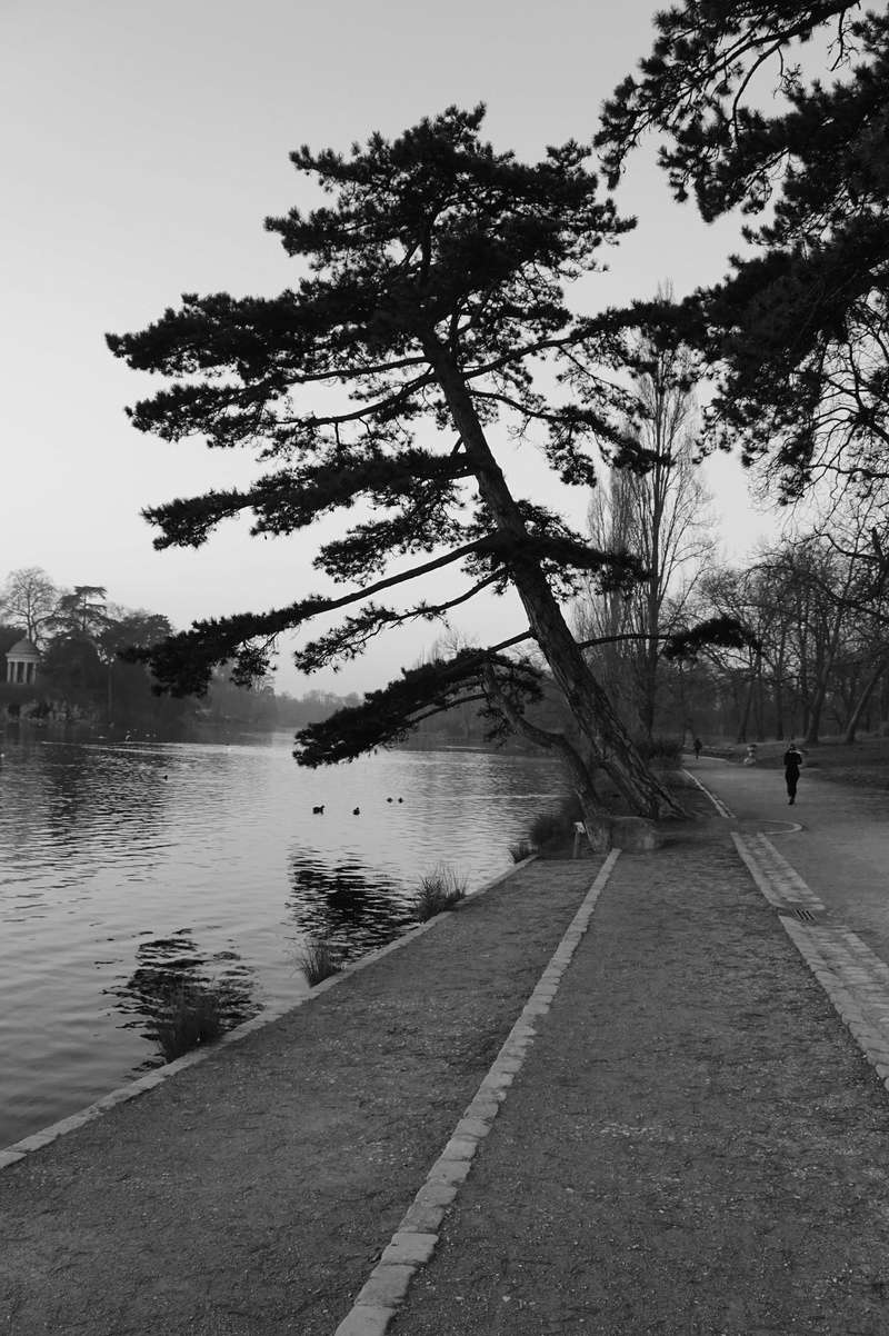 le pin et le lac Dsc01513