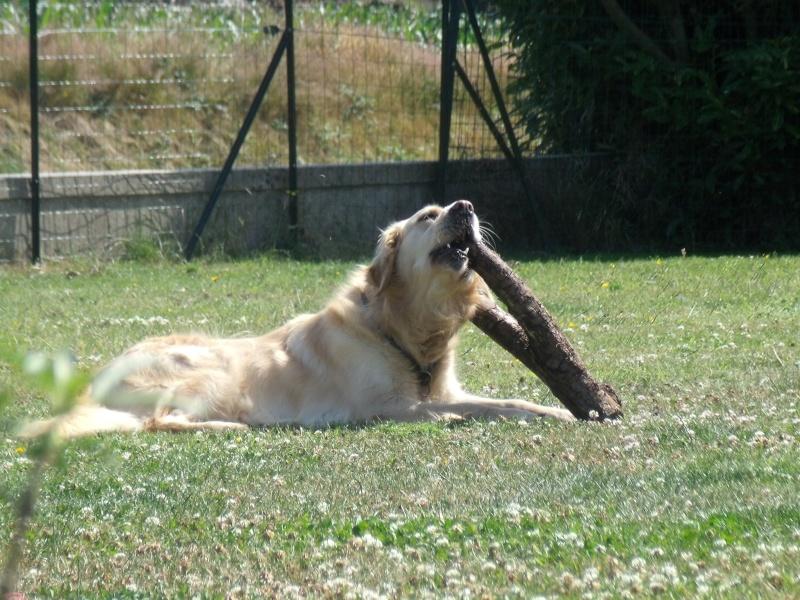 au soleil breton cet apres midi : on fait quoi? Dscf3819