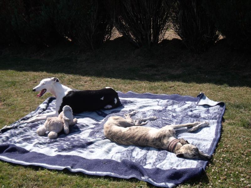 au soleil breton cet apres midi : on fait quoi? Dscf3822