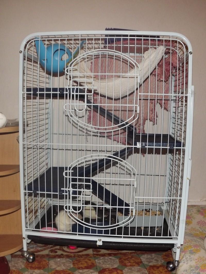les cages de mes ratous Dscf5010