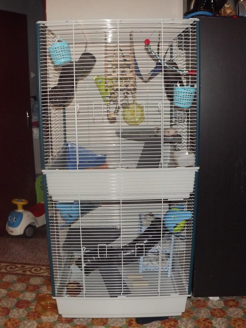 les cages de mes ratous Dscf5011