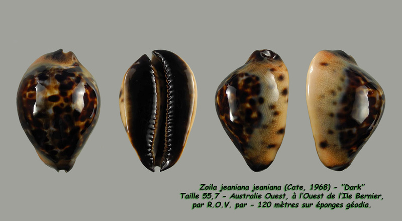 Zoila jeaniana - (Cate, 1968) - Page 3 Jeania14