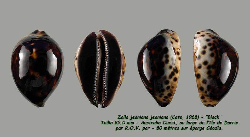 Zoila jeaniana - (Cate, 1968) - Page 3 Jeania18