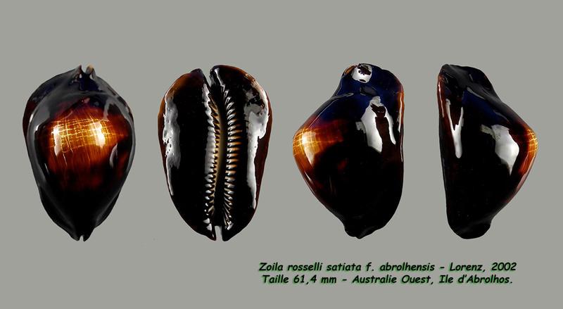 Zoila rosselli satiata - Lorenz, 2002 - Page 2 Rossel16