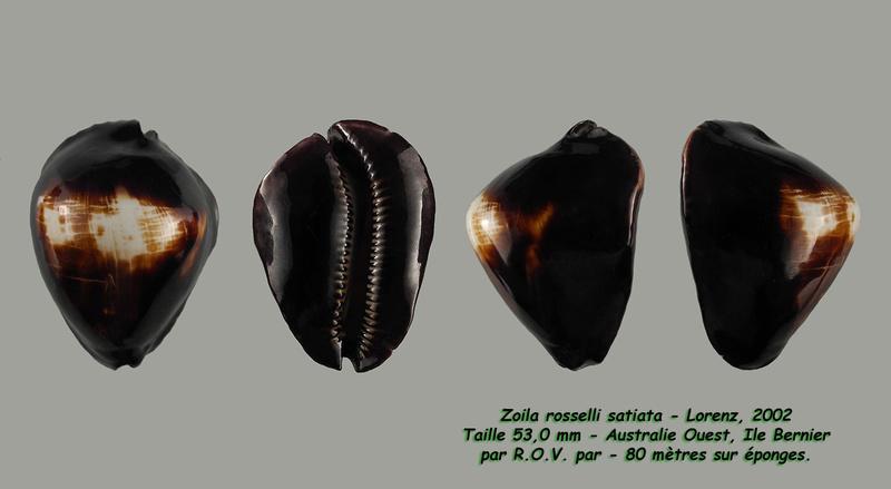 Zoila rosselli satiata - Lorenz, 2002 - Page 2 Rossel18