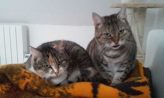 Ava tricolore et Amber tricolore et blanche - nées en 2011 e 13532811