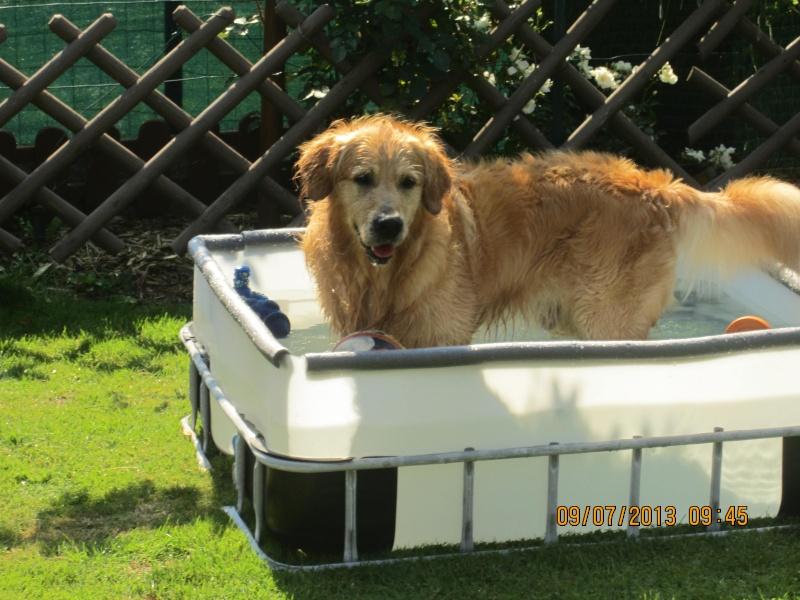 piscine pour goldinous L_eau_10