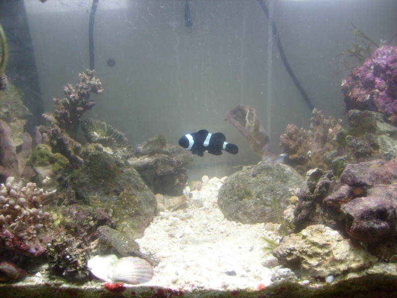 Re-arranging my tank Newcor11