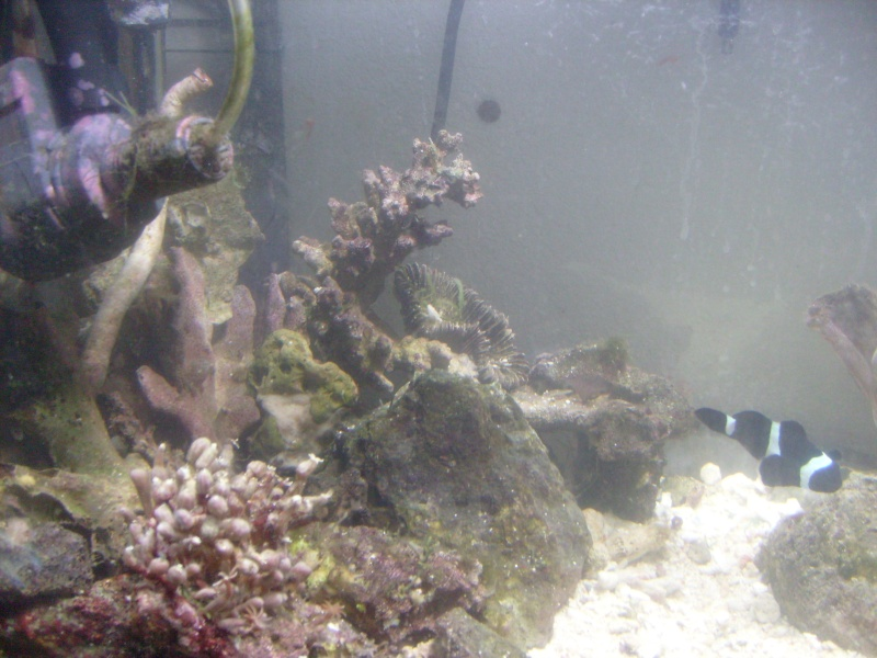 Re-arranging my tank Newcor14