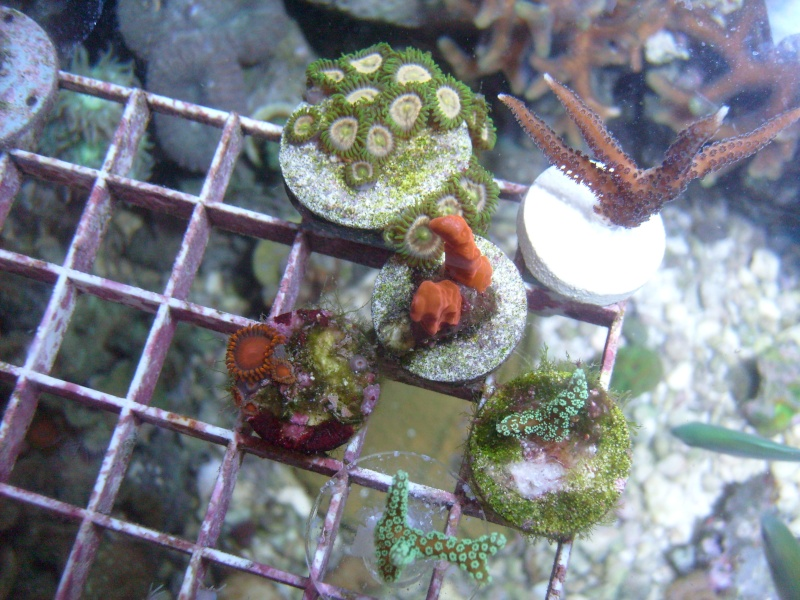 New Frags zoas/SPS New_be10