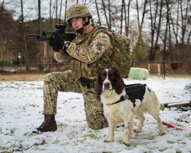 Animaux soldats - Page 6 0b34