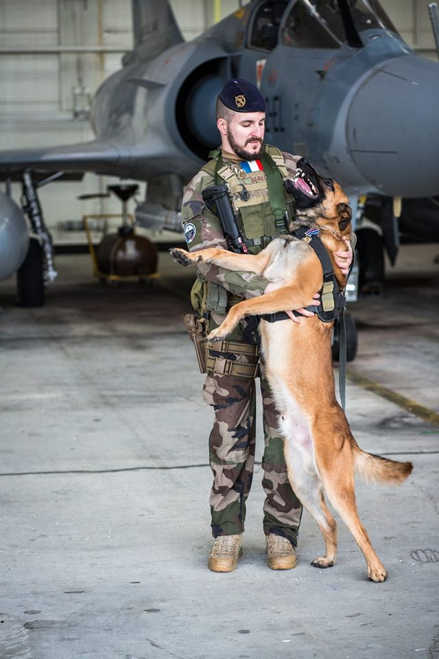Animaux soldats - Page 6 2041