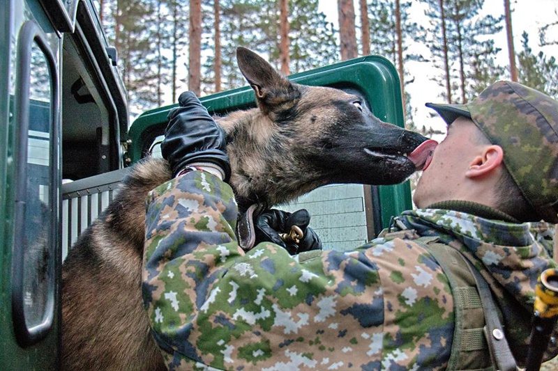 Animaux soldats - Page 6 6619