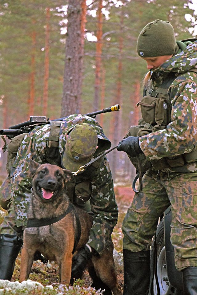 Animaux soldats - Page 6 6813