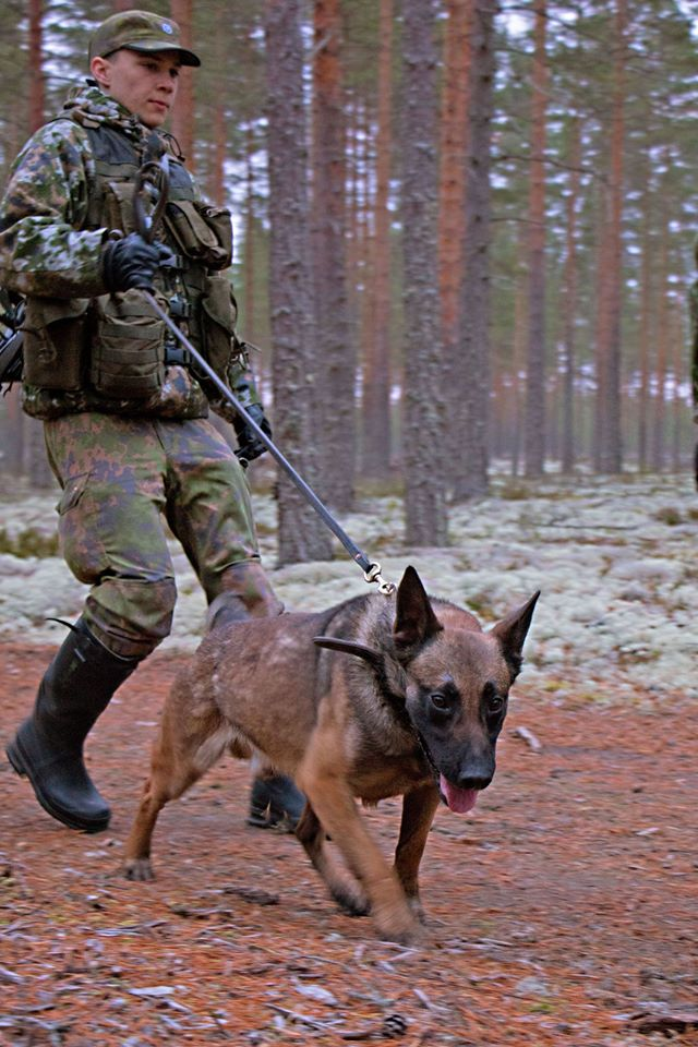 Animaux soldats - Page 6 6916