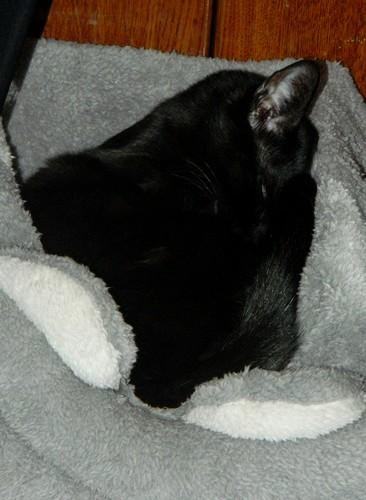 BlackMoon, mon petit chat, pas très futé, mais adorable xD Blackm11