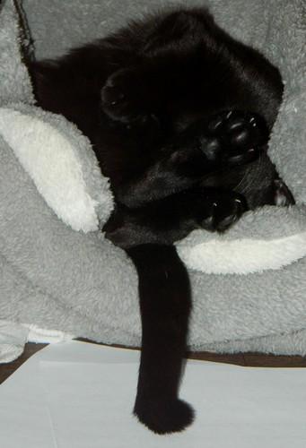 BlackMoon, mon petit chat, pas très futé, mais adorable xD Blackm12