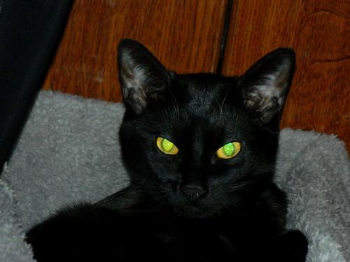 BlackMoon, mon petit chat, pas très futé, mais adorable xD Blackm13