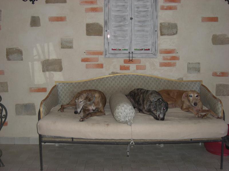 """Les"""" Doggies"""" de La Rive - Page 11 02710"""