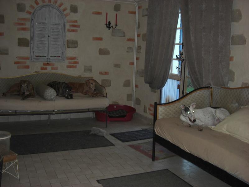 """Les"""" Doggies"""" de La Rive - Page 11 02810"""