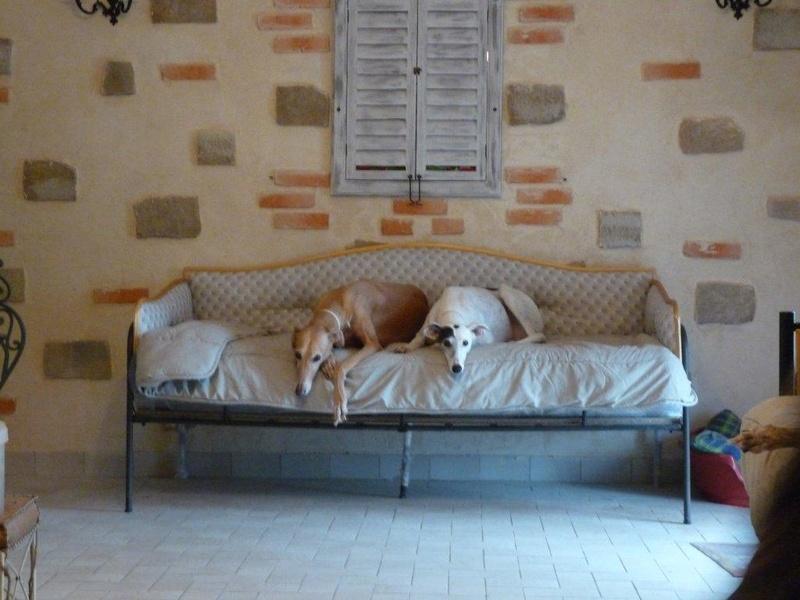 """Les"""" Doggies"""" de La Rive - Page 11 02_02_10"""