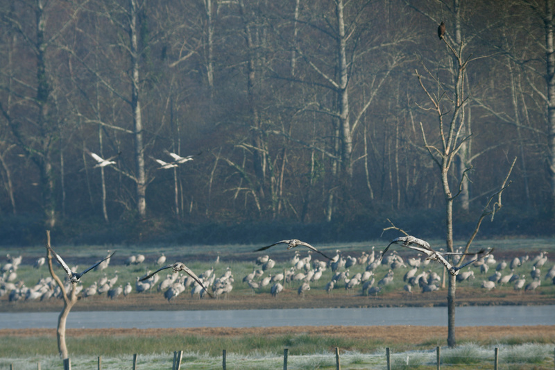 Paysages - Nature - Page 18 Img_7317