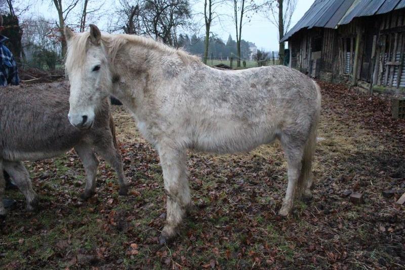 GRISOU - ONC poney né en 1994 - adopté en août 2010 - décédé pendant l'été 2017 - Page 2 1214