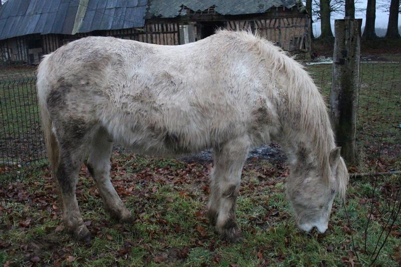 GRISOU - ONC poney né en 1994 - adopté en août 2010 - décédé pendant l'été 2017 - Page 2 1614