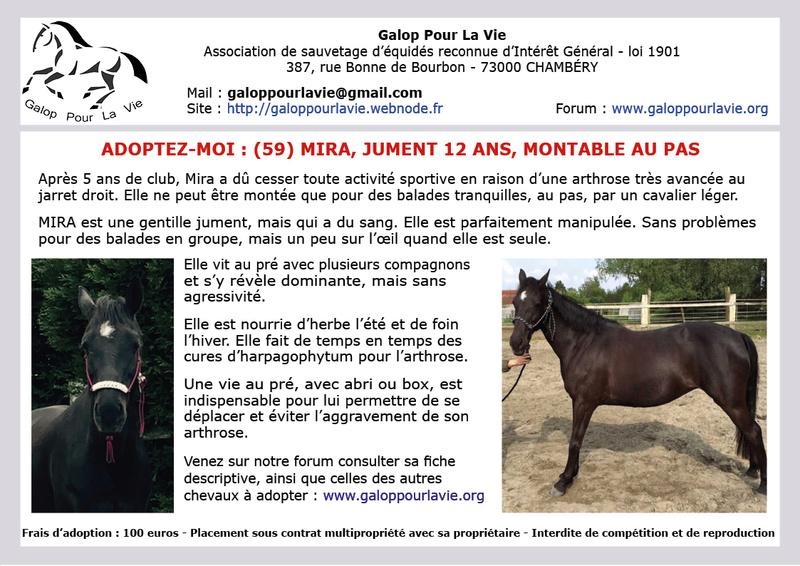 MIRA – ONC Selle née en 2005 – Sans nouvelles malgré relances - Annonce désactivée le 16.02.2017 2017_212